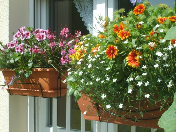 balcony flowers
